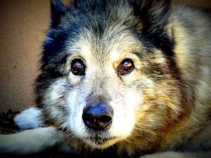 Aider les animaux : les 10 moyens les plus simples !