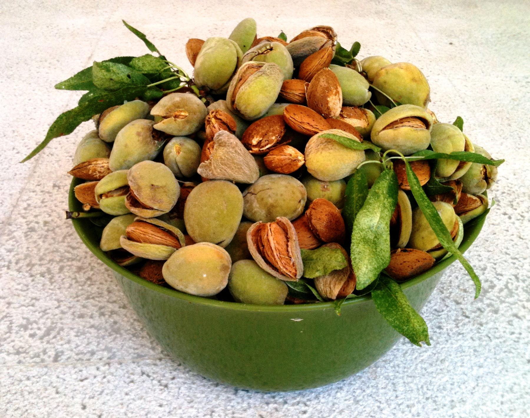 protéines végétales liste